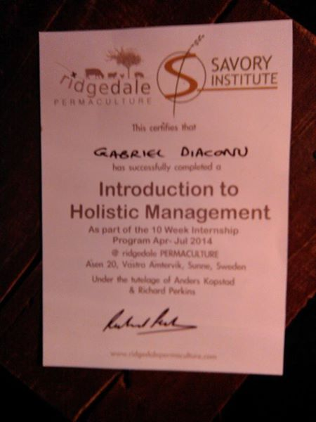 Diploma Holistic Management Gabriel Diaconu