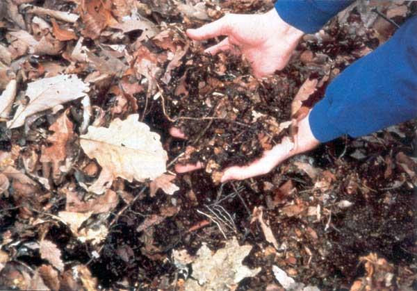 Fertilitatea solului padure