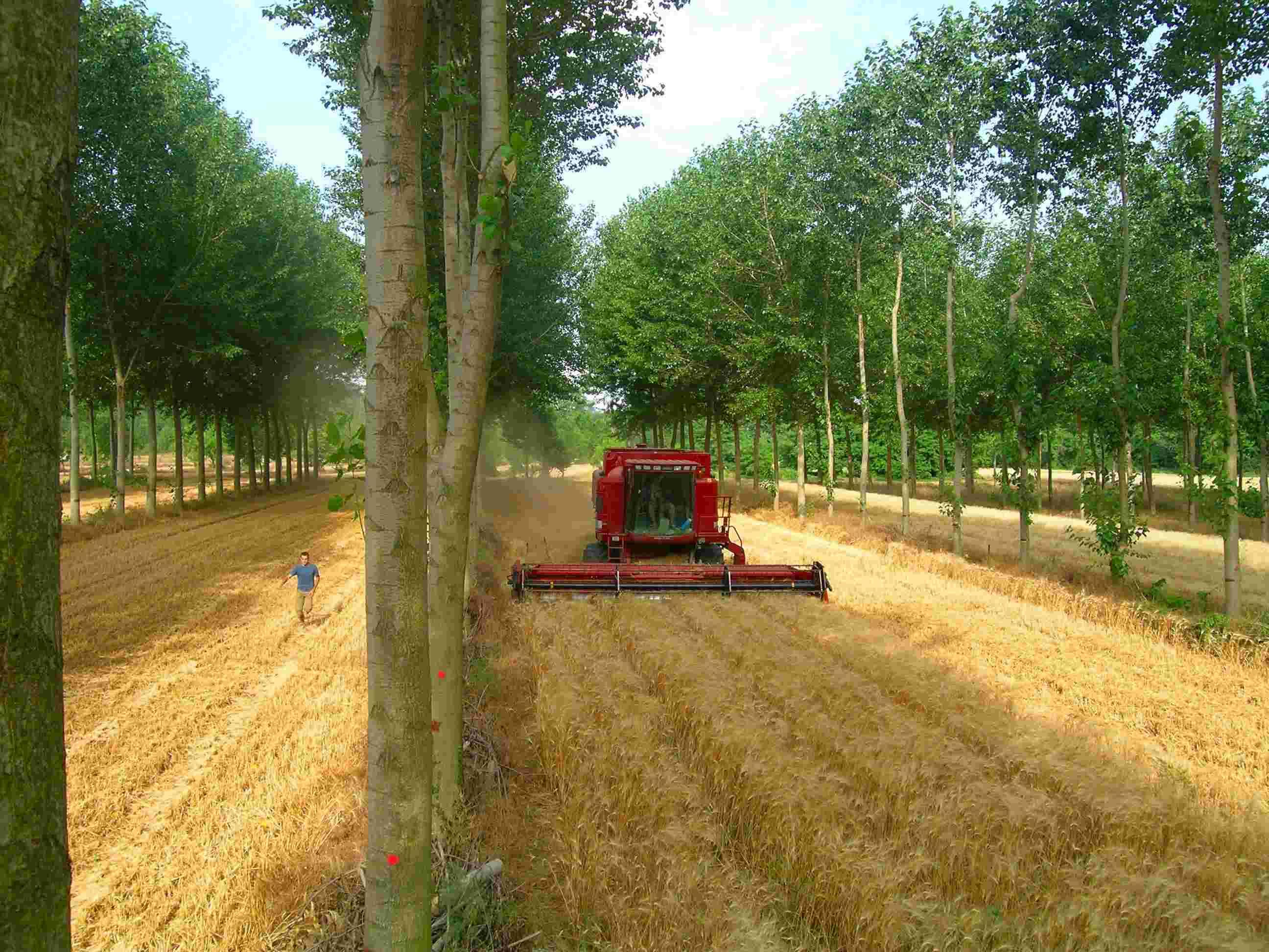 Sistem agroforestier francez