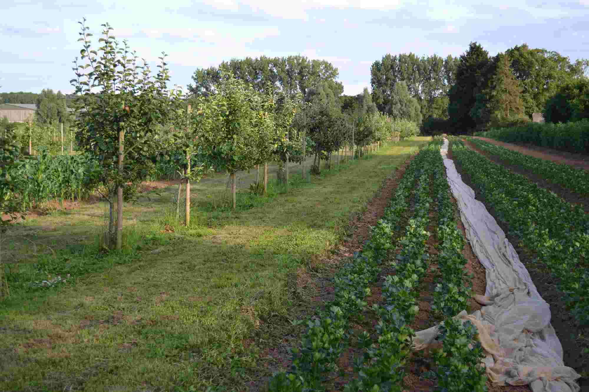 Sistem agroforestier 1 rand