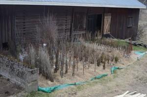 Permacultura puieti