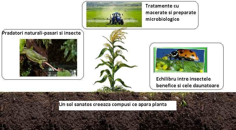 Controlul ecologic al bolilor si daunatorilor