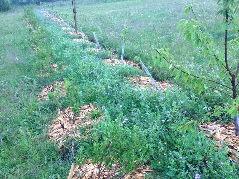 Pomicultura specii de sustinere