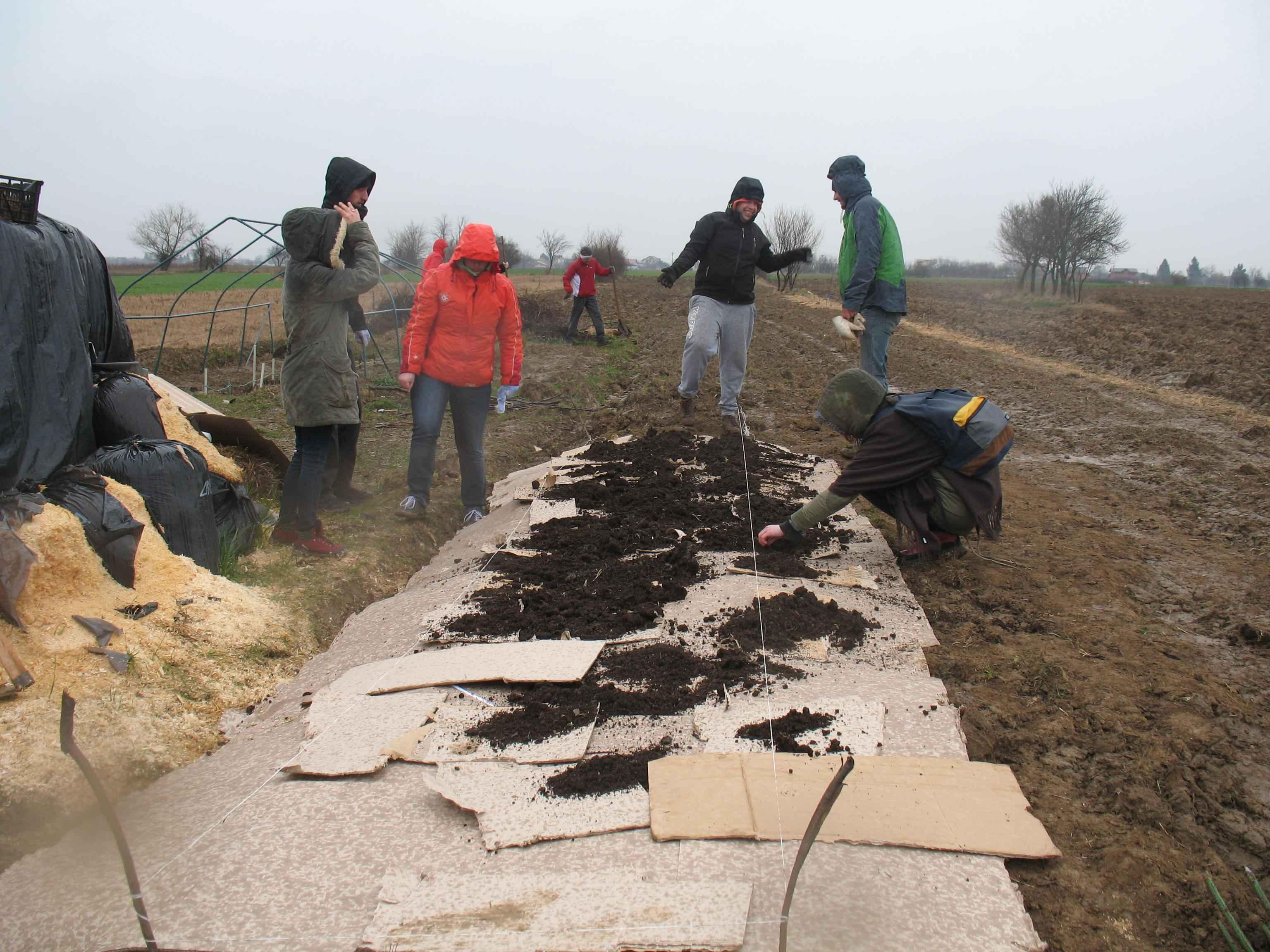 Gradina de permacultura - adaugarea balegarului