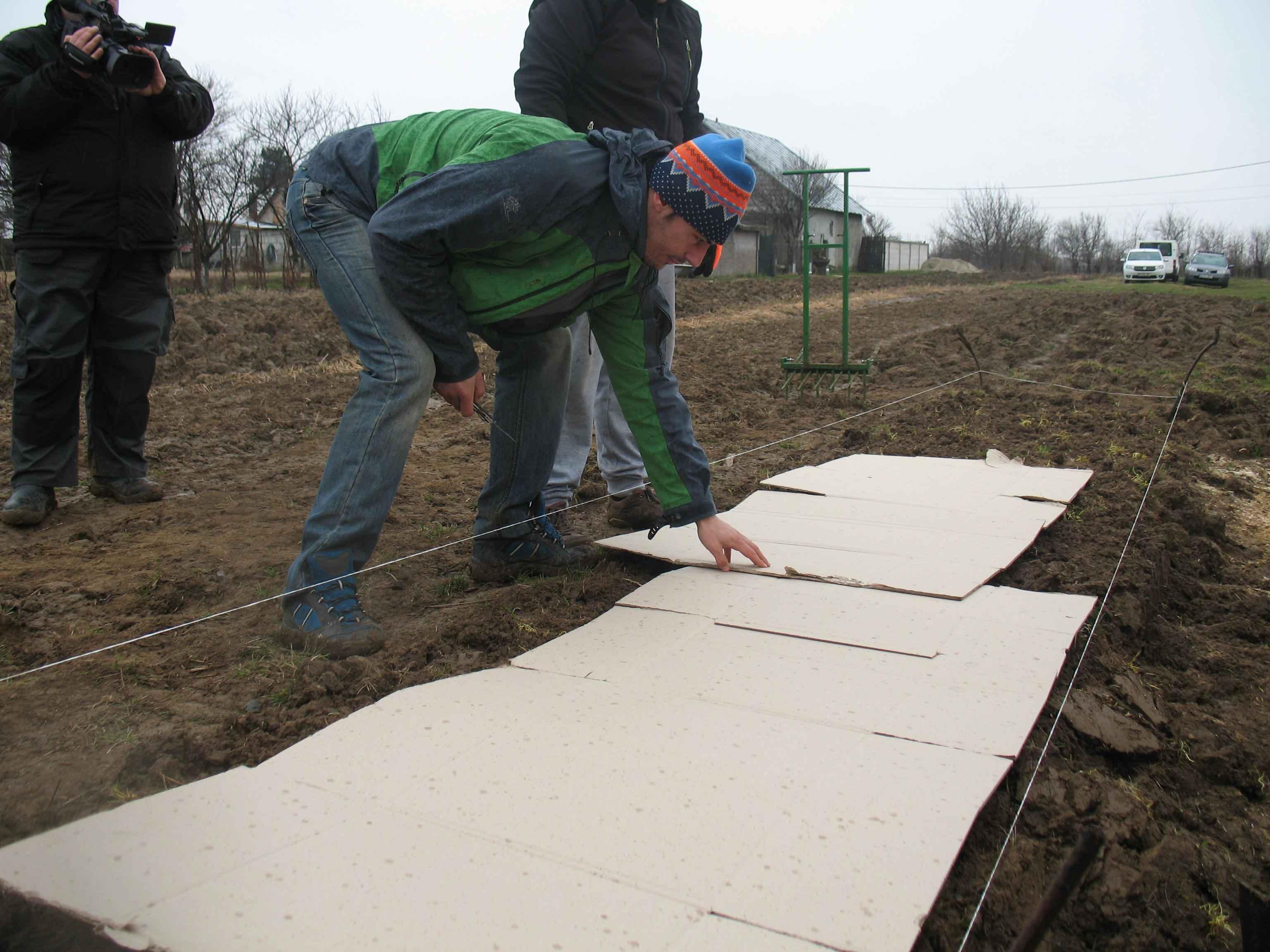 Gradina de permacultura - intinderea cartoanelor