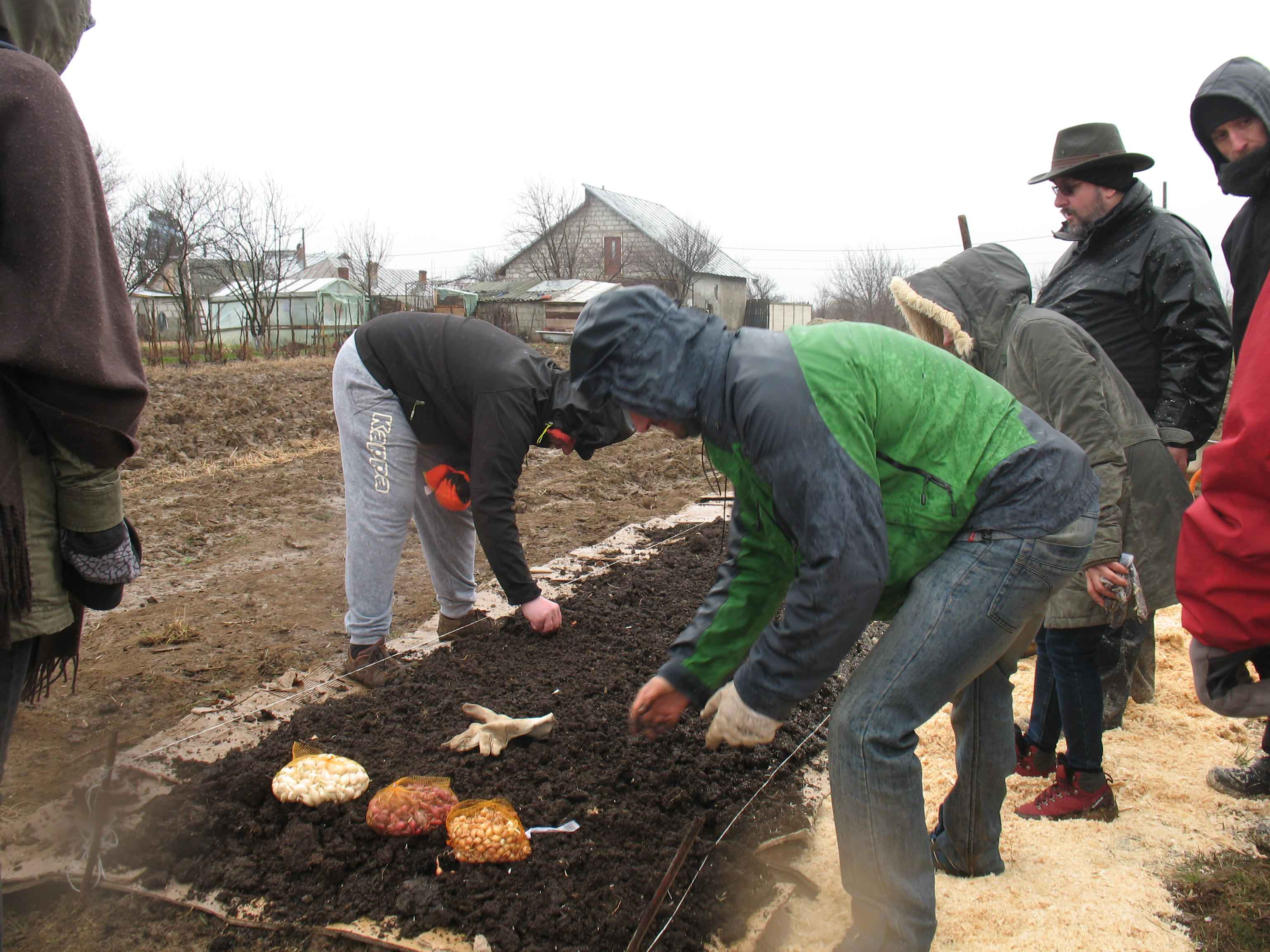 Gradina de permacultura - plantarea