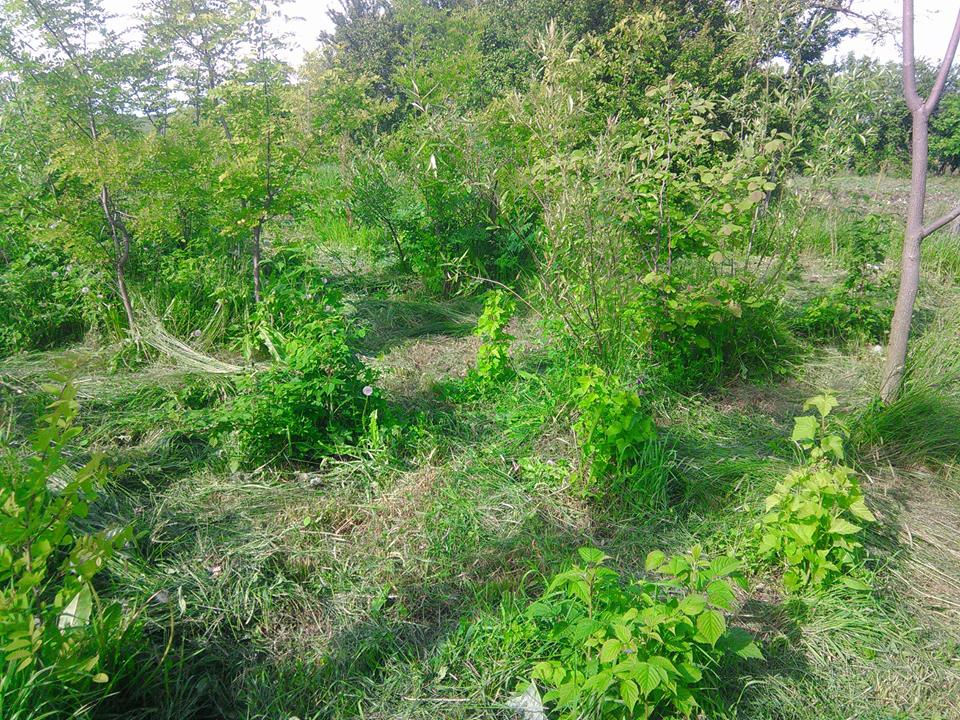 Forest garden Strambeni
