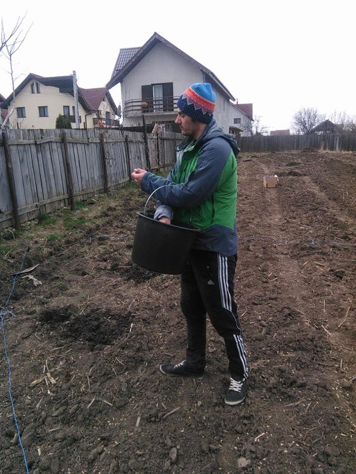 Culturi verzi - fertilizatori ecologici