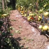Atelier practic de permacultura si agricultura ecologica, Selimbar, SB
