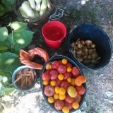 Colaj de imagini de la permacultura Strambeni si alte proiecte