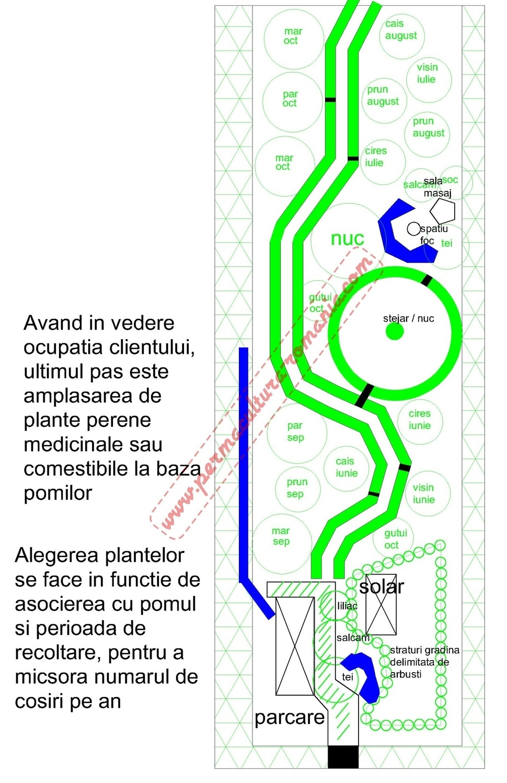 Design permacultura plante perene